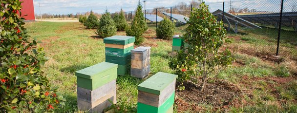 MD-Solar-Farm-Pollinator-Habitat-Bee-Boxes-Panels-H.jpg