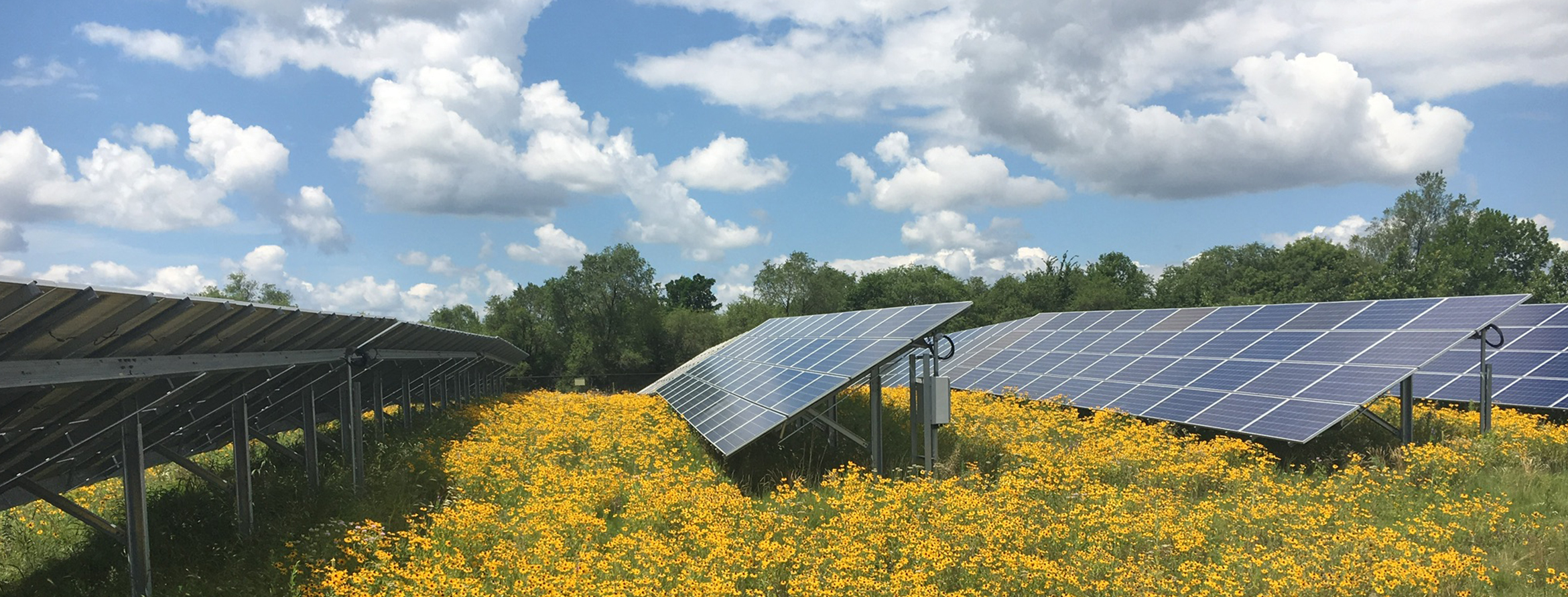 Solar panels with yellow pollinator species
