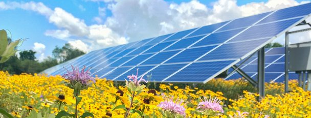 Solar panels with pollinator species and grass. Photo: Rob Davis